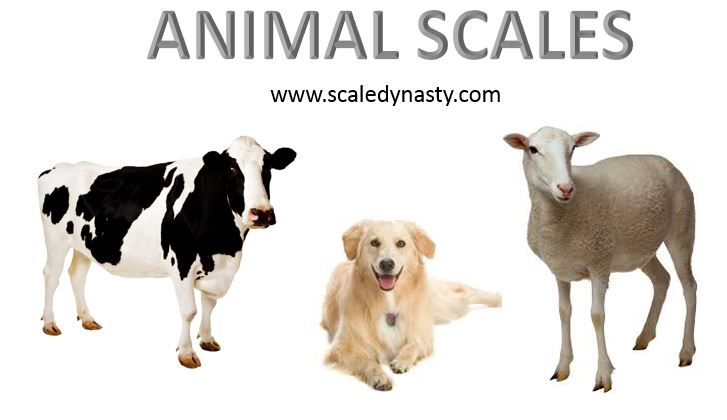 Animal Scales Cattle Scales Livestock Scales Vet Scales